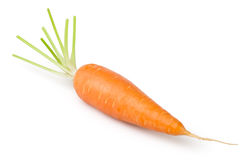Carrot one Royalty Free Stock Photo