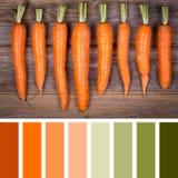 Carrot palette Stock Image