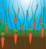 Carrot pattern Stock Image