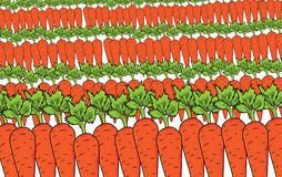 Carrot pattern Stock Photography
