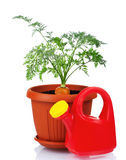 Carrot in plastic pot Royalty Free Stock Photography