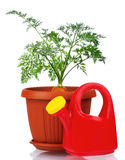 Carrot in plastic pot Stock Images