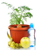 Carrot in plastic pot Royalty Free Stock Photo