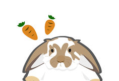 Carrot and Rabbit Royalty Free Stock Images