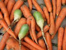 Carrot and radish Stock Photo