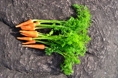 Carrot on rock background Stock Photos