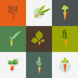 Carrot. Set of decorative vector design elements Stock Images