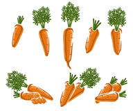 Carrot set. Vector Stock Photos