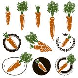Carrot set. Vector Royalty Free Stock Photography