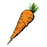 Carrot. Single colorful  carrot on white Royalty Free Stock Photography