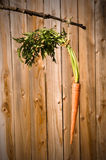 Carrot on a stick Royalty Free Stock Images