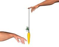 Gods carrot Stock Image