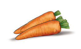 Carrot still life. Carrot vegetable  on white background cutout. Still Life, Digital illustration Royalty Free Stock Photography