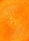 Carrot surface texture Stock Image