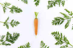 Carrot  surrounded greens Stock Images