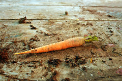 Carrot on the table Royalty Free Stock Photo