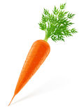 Carrot with top stock illustration