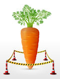 Carrot tuber located in restricted area Stock Image