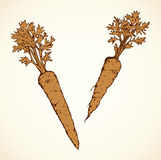 Carrot. Vector drawing Stock Images
