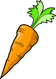 Carrot Vector Illustration Royalty Free Stock Photography