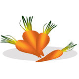 Carrot vector illustration. Royalty Free Stock Image