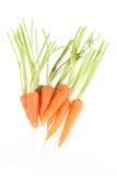 Carrot Stock Image