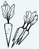 Carrot vegetable with leaves Royalty Free Stock Photos