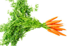 Carrot vegetable with leaves isolated Royalty Free Stock Images