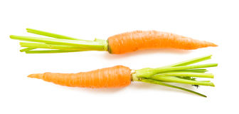 Carrot vegetable with leaves Stock Photos