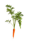 Carrot on white Stock Images