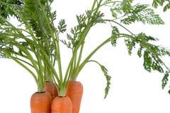 Carrots_04 Royalty Free Stock Photos