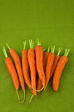 Carrots. Fresh young carrots on green background Royalty Free Stock Image
