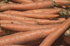 Carrots. A pile of carrots royalty free stock photo