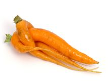 Carrots. Photo of two carrot which were unusually interlace Royalty Free Stock Images