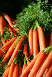 Carrots. Bunches of fresh carrots at a farmers' market Stock Photos
