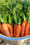 Carrots 2. Homegrown carrots fresh from the garden Stock Photos
