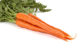 Carrots. Bunch of fresh carrots on a white background Royalty Free Stock Images