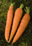 The carrots Royalty Free Stock Photos