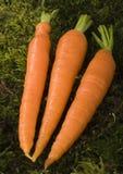 The carrots Royalty Free Stock Photos