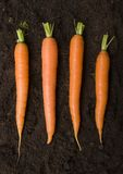 The carrots Stock Photography