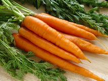 Carrots. Bunch Royalty Free Stock Photography