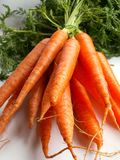 Carrots. Young carrots Royalty Free Stock Photos