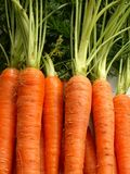Carrots. Background Stock Image