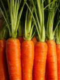 Carrots. Fresh young carrots background with leaves Stock Images