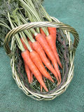 Carrots Stock Photos
