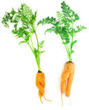 Carrots as a boy and girl royalty free stock photos