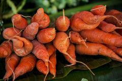 Carrots with banana leafs background from the villager market northern of Thailand Royalty Free Stock Photo