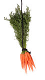 Carrots on black rope Royalty Free Stock Photo
