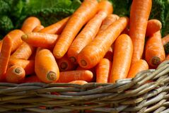 Carrots on Brown Woven Basket Royalty Free Stock Photos