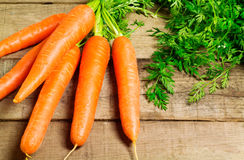 Carrots bunch Stock Image